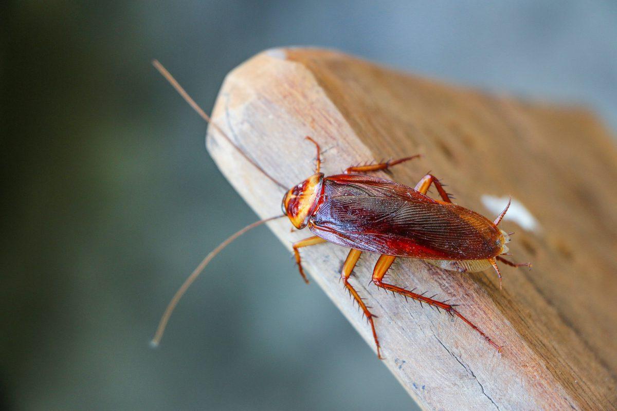 Tratamiento Contra Cucarachas
