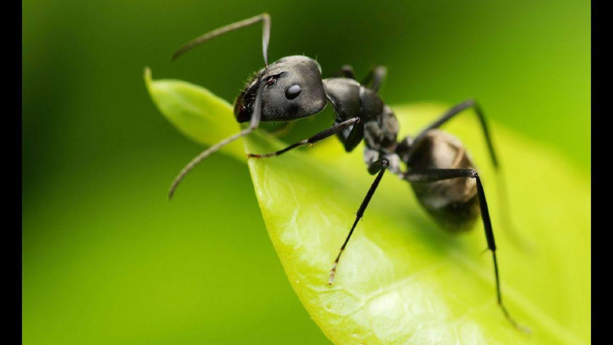 Tratamientos Contra Hormigas